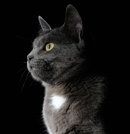 grey cat: cute grey cat
