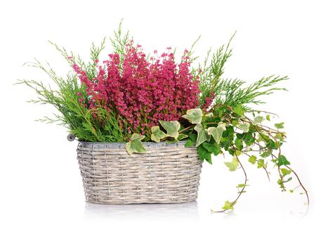 heather: basket with heather Stock Photo