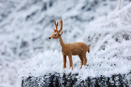animales del bosque: Ciervo pequeño en el bosque congelado