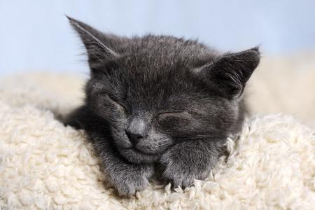 cute kittens: cute sleeping kitten Stock Photo