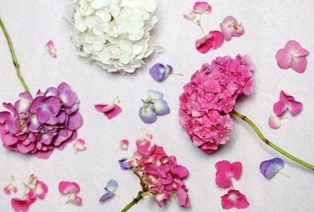 fondos violeta: floral composition with hydrangea flowers