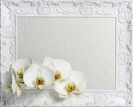 cornice con orchidee bianche
