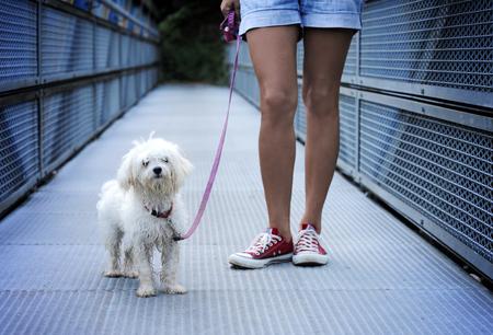 長い散歩の後かわいい犬