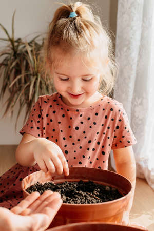 little girl sows plants in a flower pot at home. Agriculture and horticulture.