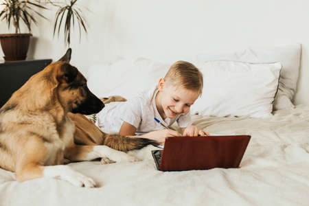 blonde eight-year-old boy studies at home online with a laptop. Children and a dog on the bed. Stock Photo