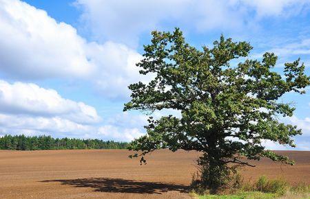 Tree. Landscape.