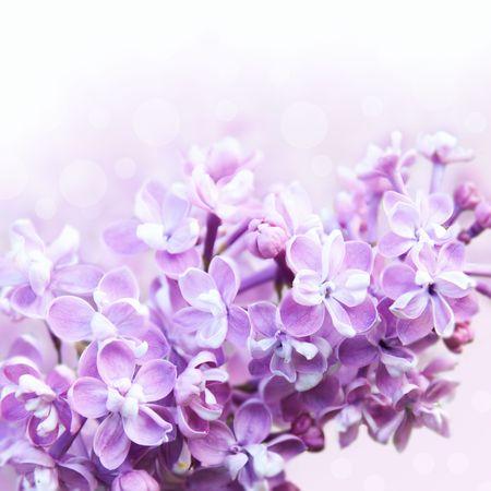 Lilac border Stock Photo
