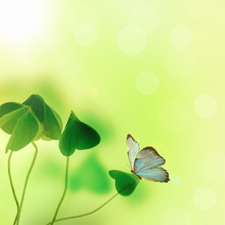 clover and butterfly Stock Photo
