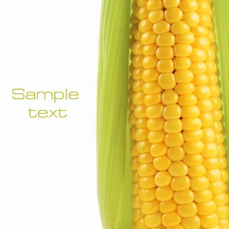 corn rows: corn