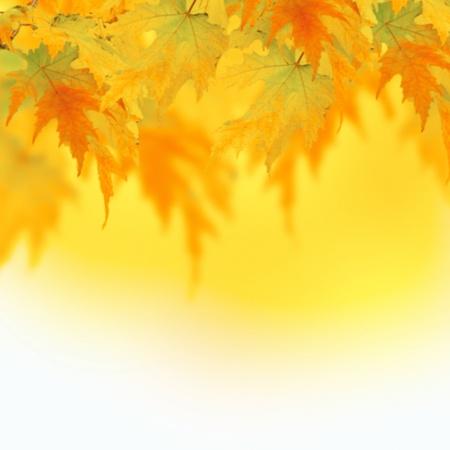 Beautiful border. Autumn Leaves. Stock Photo