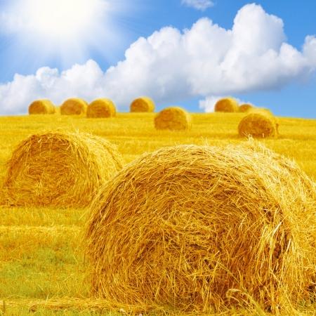 fardos: Balas de heno en un campo bajo un cielo azul Foto de archivo