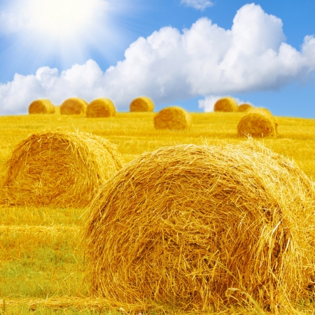 bale: Hay bale in a field under a blue sky Stock Photo