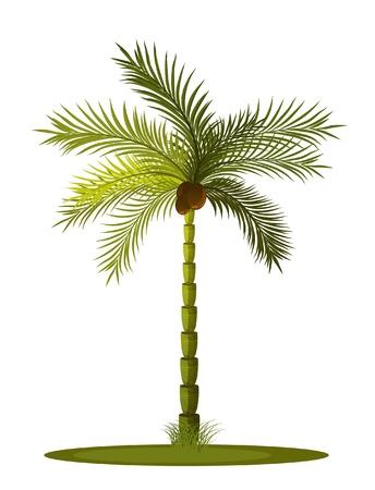 subtropical: palm tree