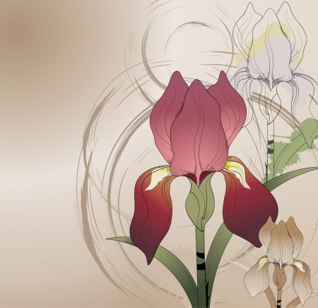 floral background with flowers iris  Illustration