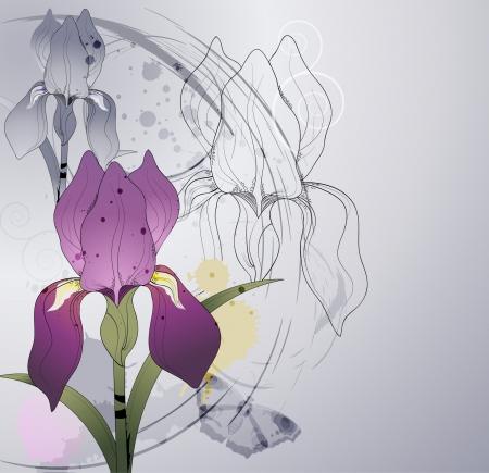 iris: floral background with flowers iris  Illustration