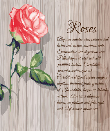 watercolor technique: Image of Roses in the watercolor technique on the background of wooden planks. Illustration