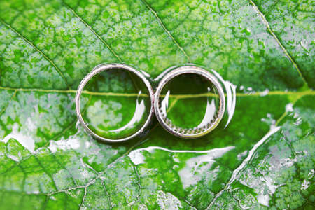 Wedding rings on green leaf with water drops. Top view, macro, closeup