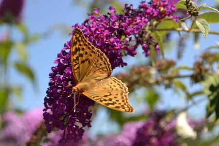 butterfly on a lilac branch Zdjęcie Seryjne