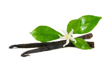 vanilla flower: Vanilla sticks with flower