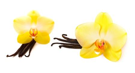 flor de vainilla: Palitos de vainilla con flor