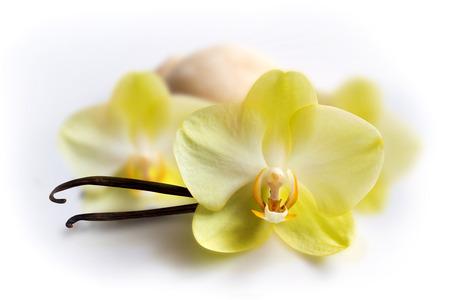 flor de vainilla: Vainilla se pega con la flor y helados