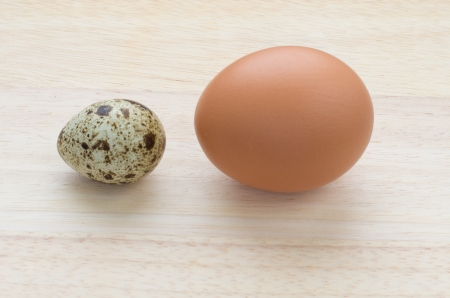 Difference in size between quail and chicken eggs  Stock Photo - 17132141