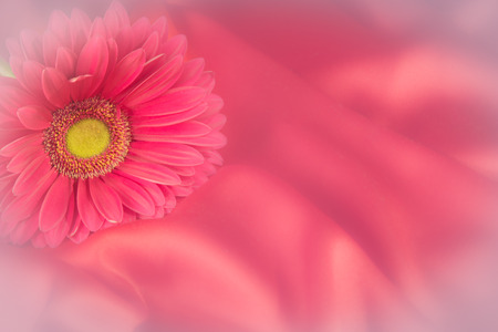 One gerbera flower on a background from silk color  fabric