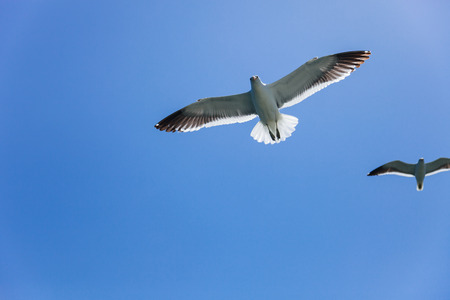 two seagulls flying high in the blue air
