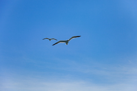 screen savers: two seagulls flying high in the blue air, waving their wings over the ocean