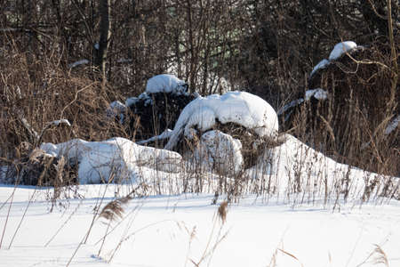 snowdrifts formed by snowy winter in the woods on the banks of a marshy stream