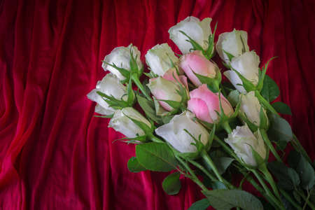 big bouquet of white and pink roses for different occasions, wishes and congratulations on a colored background