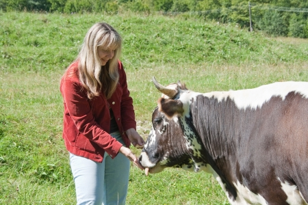 holidays vacancy: Young woman feeding a cow