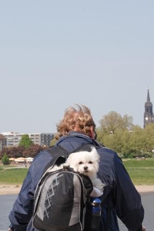 mochila de viaje: Perro mochila de viaje Foto de archivo