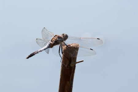 dragonfly on the branch photo