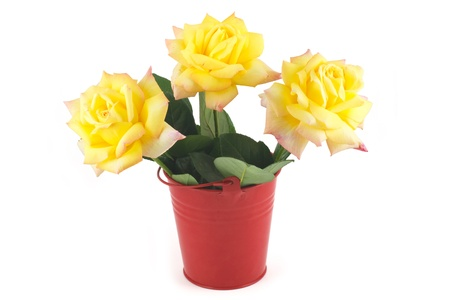 Yellow roses in a red bucket photo