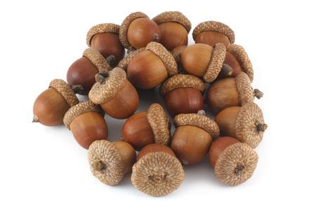 pile of acorns isolated on white