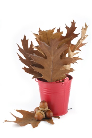 Oak leaves in a red bucket and acorns photo