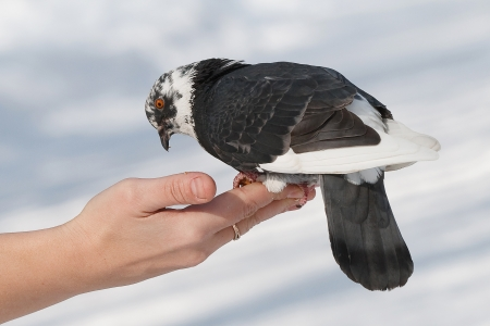 a dove on his hand photo