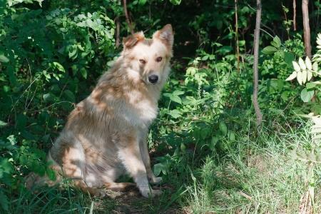 view stray dog Stock Photo - 16891275