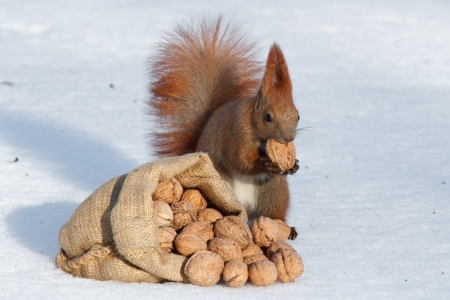 The richness of squirrel  photo