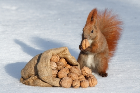 richness: The richness of squirrel Stock Photo