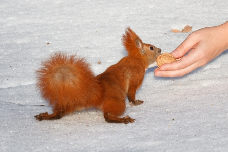 Squirrel holding the woman s hand Stock Photo - 17157963