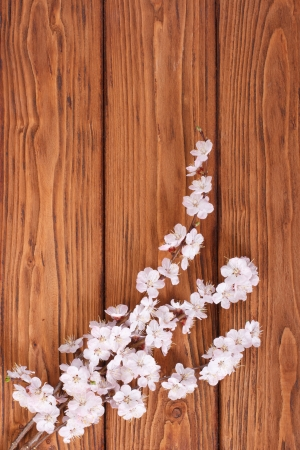 Flowering branch of apricot on background of wooden boards photo