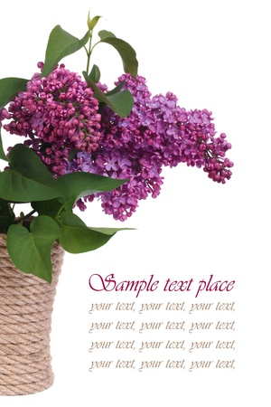 a bouquet of lilacs in a vase isolated on white background  photo