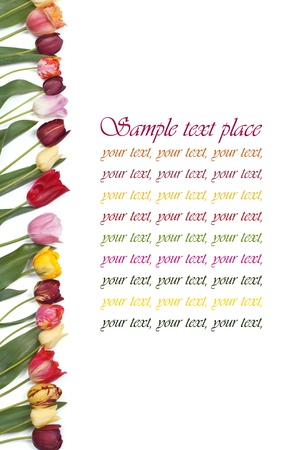 Festive frame colors of tulips on a white background photo