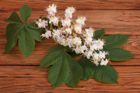 Chestnut flowers with green leaves on brown wooden table photo