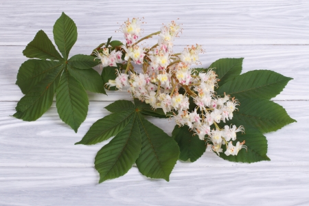 Chestnut flowers with green leaves photo