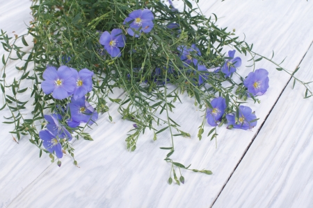 Blue flax flowers with buds on a wooden table photo