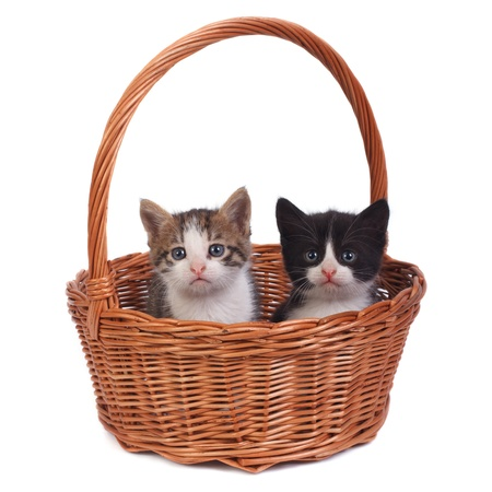 Two small kittens in a wicker basket isolated on white Stock Photo - 20793366