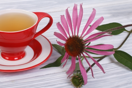 Tea with Echinacea in a red cup on the table photo